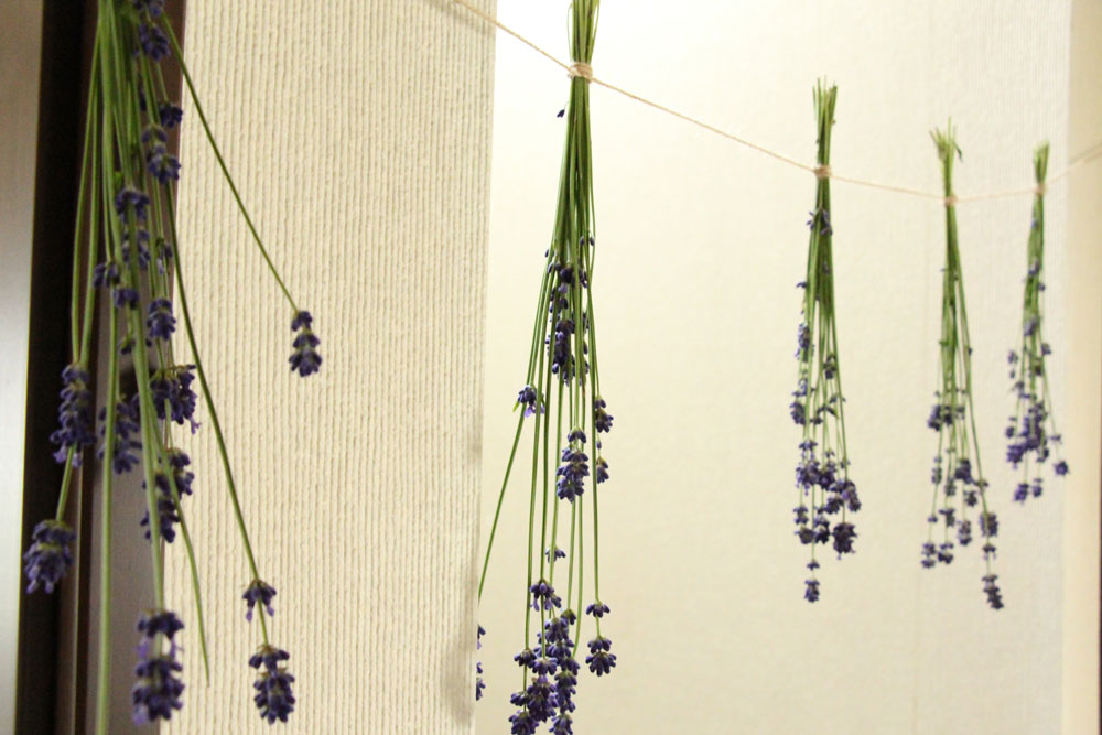 lavenderdry