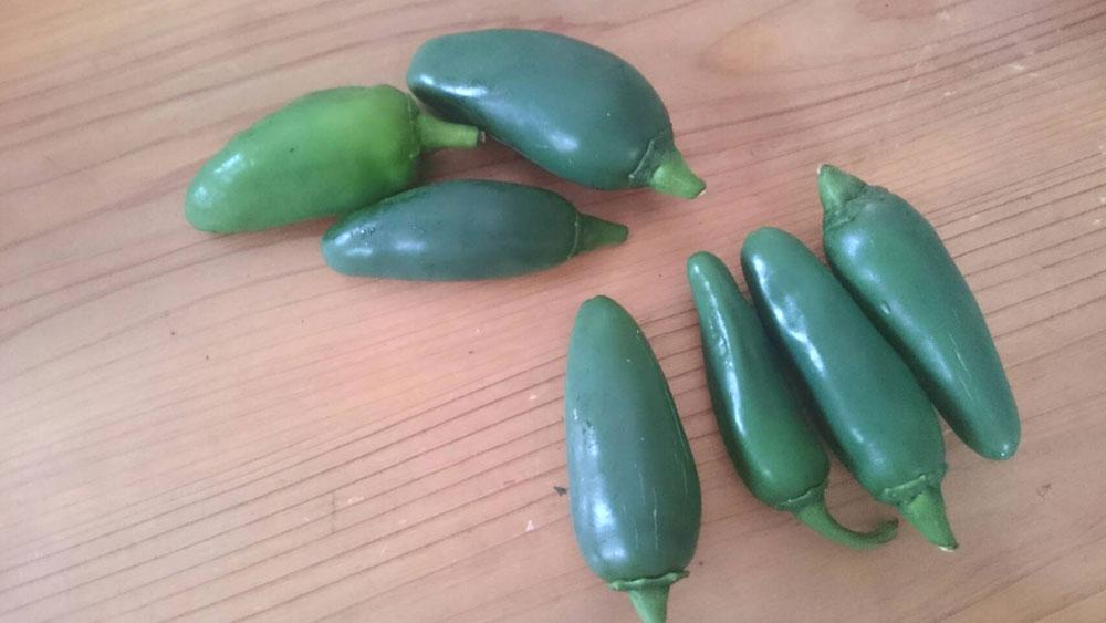 jalapeno-pepper3